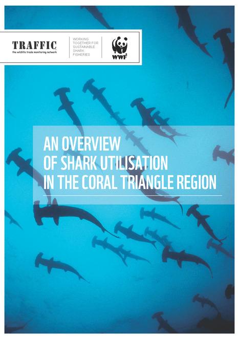 indonesia shark petition u2022 scuba diver life rh scubadiverlife com