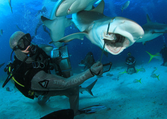 Best Dive Sites in the Bahamas