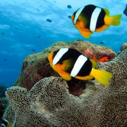 Top Five Coral Dives In Vanuatu Scuba Diver Life