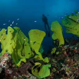 Scuba Diving in Milne Bay