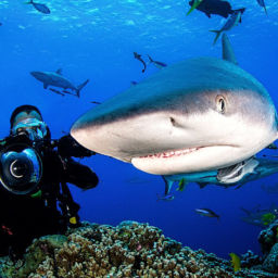 Shark Diving in the Coral Sea