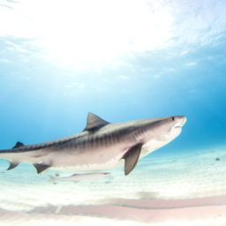 Shark Dives in South Africa