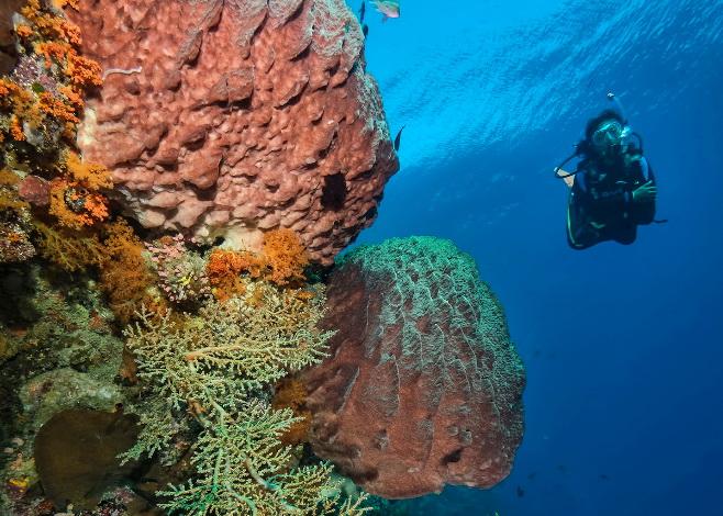 Scuba Diving in Timor Leste