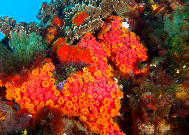 Name Your Own Coral Reef
