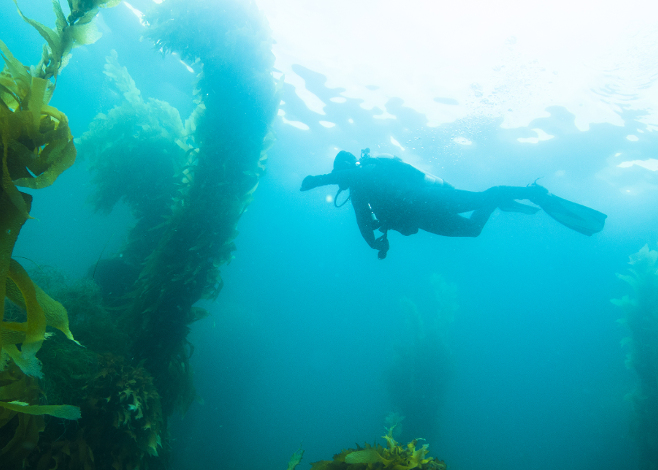 Best Cold Water Scuba Diving