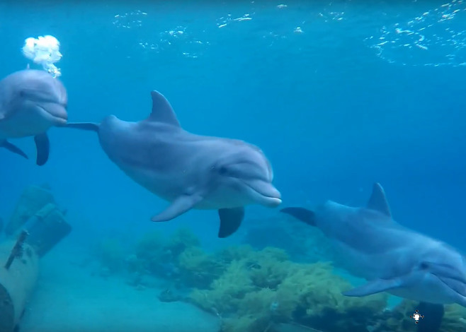 red_sea_dolphins_featured