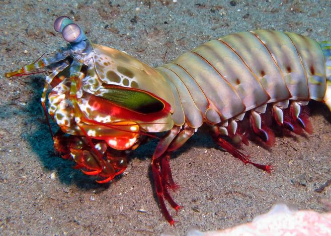 Rare Marine Life