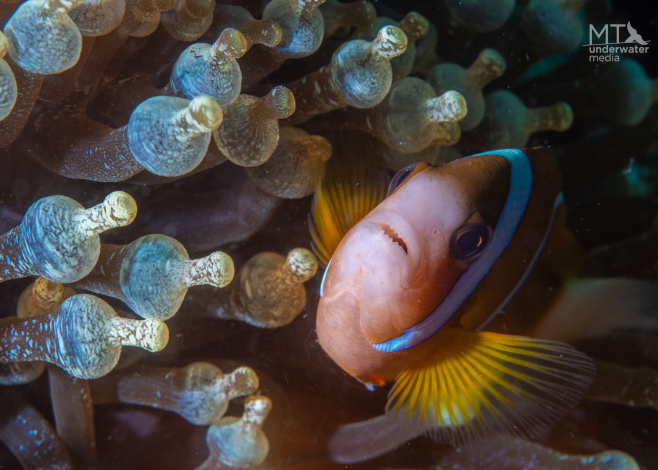 macro life on the great barrier reef